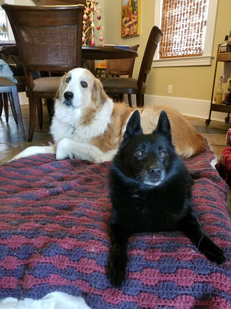 dogs sitting lying bed white black
