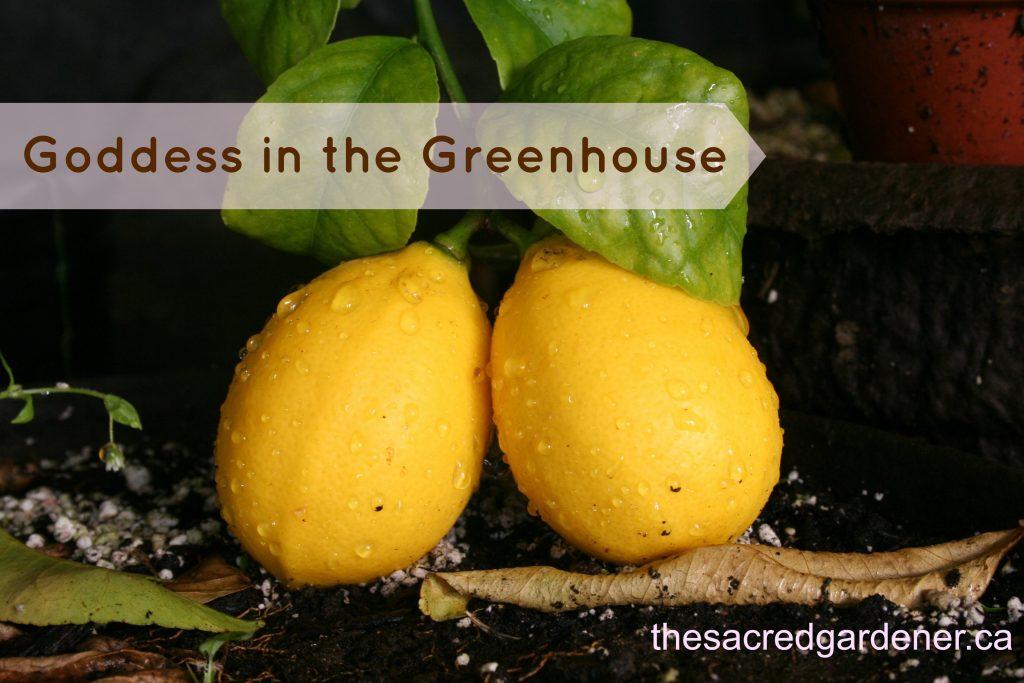 greenhousegoddess