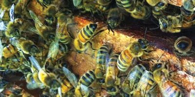 The Sacred Gardener Bees