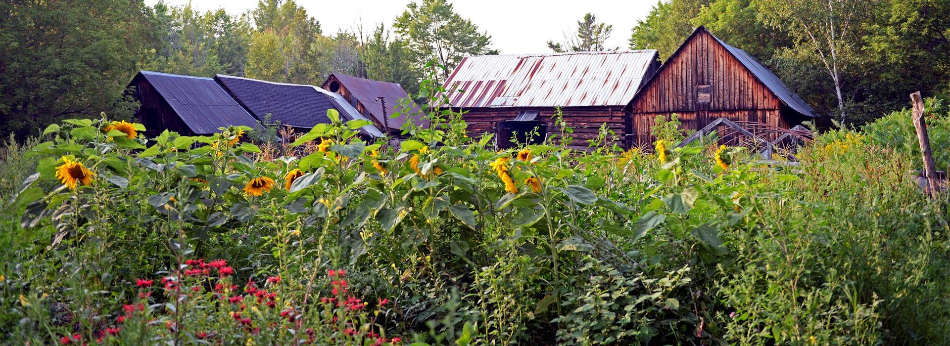 The Sacred Gardener School