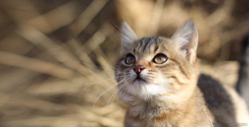 Here Kitty Kitty City