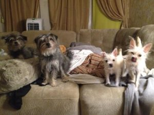 My 4 clones