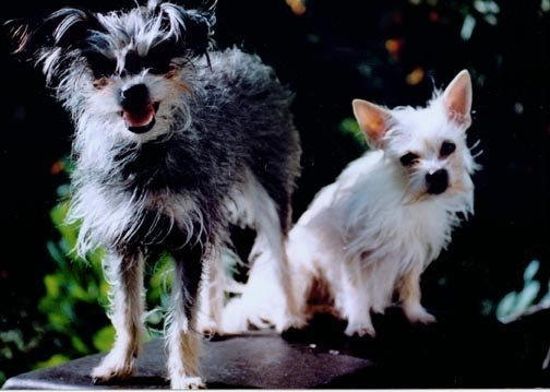 Dog Cloning. These are the two original dogs before I cloned them.