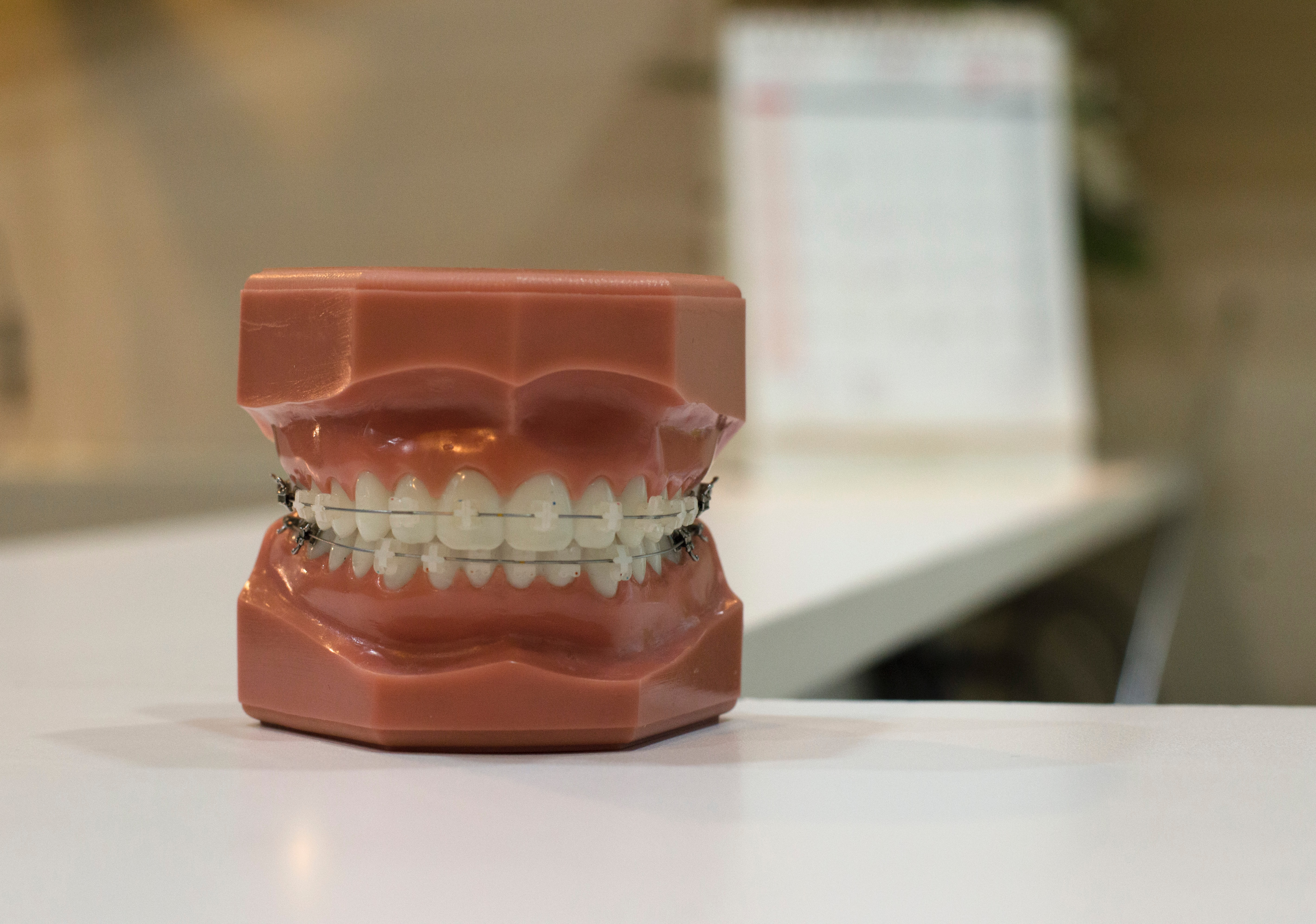 model of teeth with braces attached to it