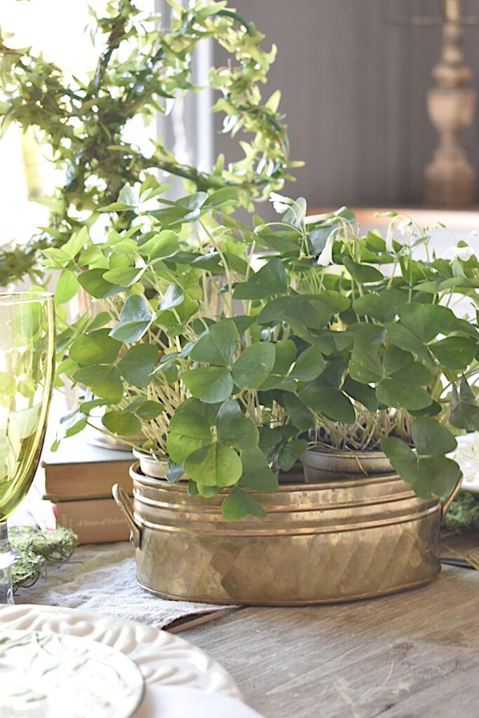 oxalis plant for St. Patrick's Day tablescape