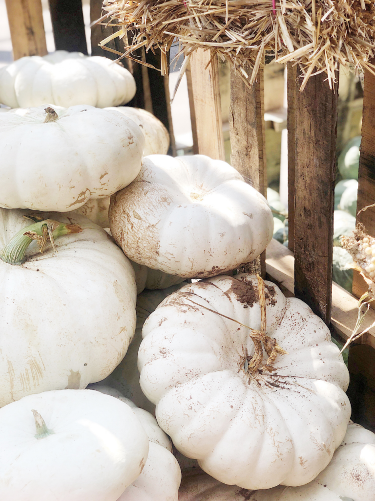 a large pile of white heirloom pumpkins