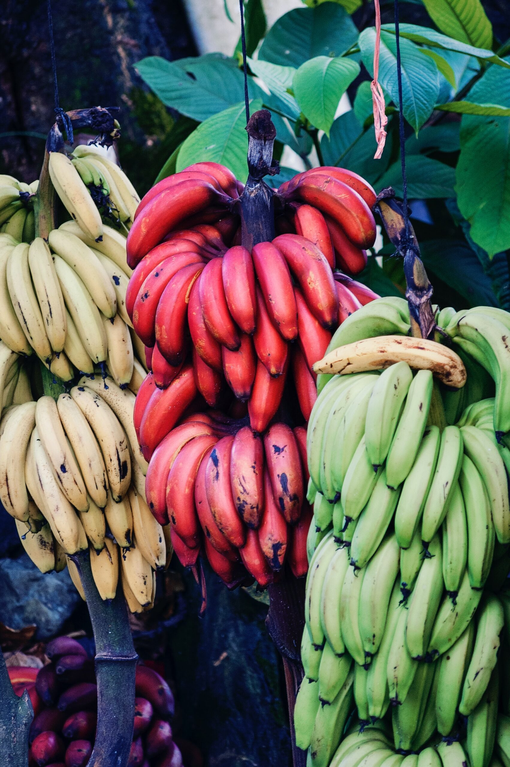 benefits of red banana