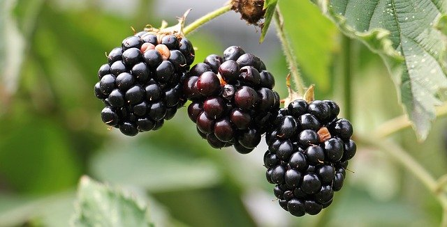 Benefits of Blackberry