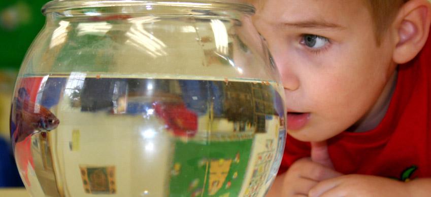 Kid with fish at Montessori Children's School of Northfield