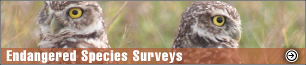 Endangered Species Surveys - Burrowing Owl Survey, Gopher Tortoise Survey, Scrub Jay Survey, Broward County MPP, Volusia County MPP, Dune Restoration, Sea Turtle Protection