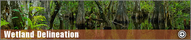 Wetland Delineation -  Rapanos Analysis, UMAM Analysis, Mitigation Banking