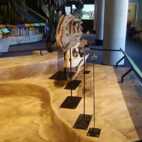 Academy of Natural Sciences - Dino Hall Platforms