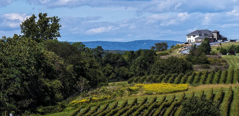 Canberra Wine Region