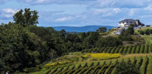 Wine Tasting with Grand Touring Coach Charter