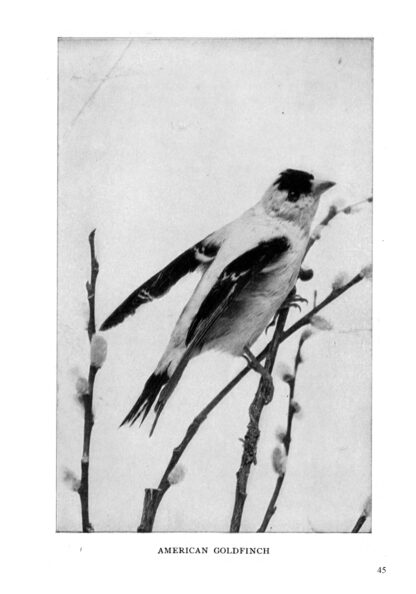 Complete Book of Birds Image 7