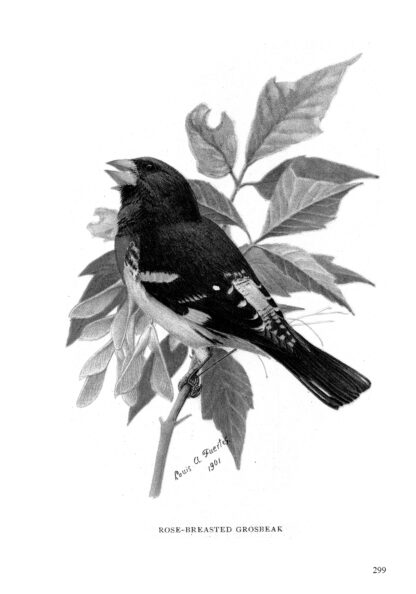 Complete Book of Birds Image 11