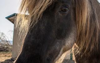 GH horse