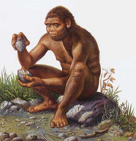Homo habilis knapping tools