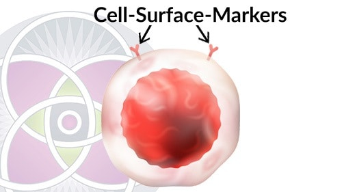 All cells have specific membrane cell-surface-markers that are characteristic for that kind of cell.