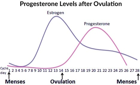 Progesterone levels after ovulation are the cause of break-outs during your period