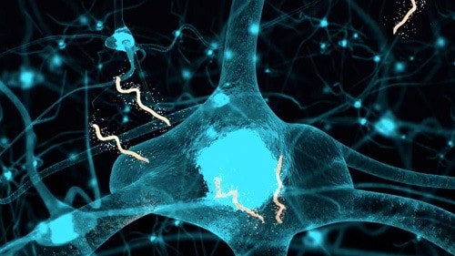 The Borrelia spirochaete can burrow itself into your central nervous system.