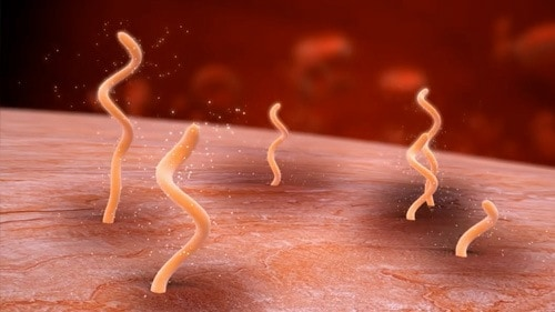 The Borrelia spirochaete can drill into your tissue and hide from antibiotics.