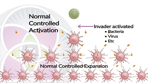When you immune system is activated it releases a cascade of cytokines.
