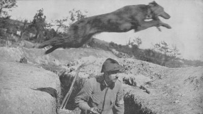 french-courier-dog-leaping-over-soldier-in-trench
