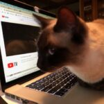 Reiki cat healing examples