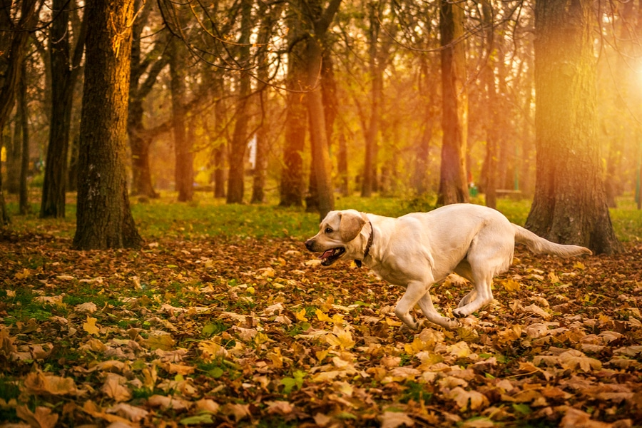 Dog in Fall