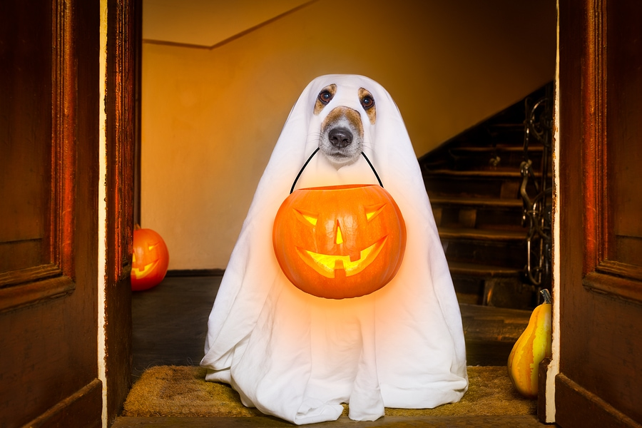Halloween-Ghost-Dog-Trick-Or-Treat