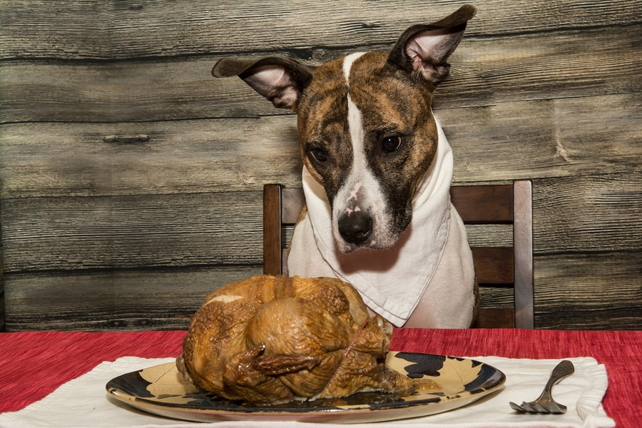bigstock-Begging-for-a-Holiday-Feast-109544150