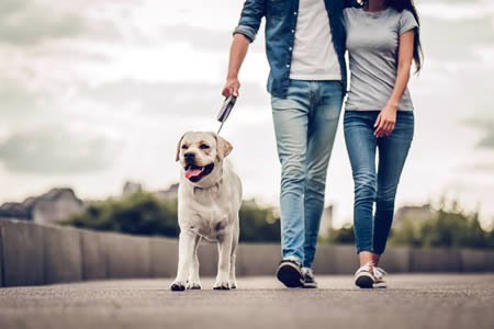 new-dog-walking-guide-routine