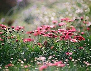 Allergist | Asthma | Immunology | Allergic Dermatology