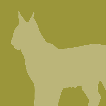 YRWS lynx