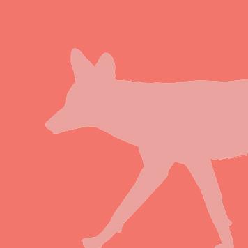 Coyote at Yellow River Wildlife Sanctuary