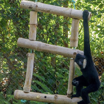 Bamboo feeder enrichment yellow river wildlife