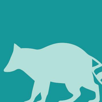 Yellow River Wildlife Raccoon icon