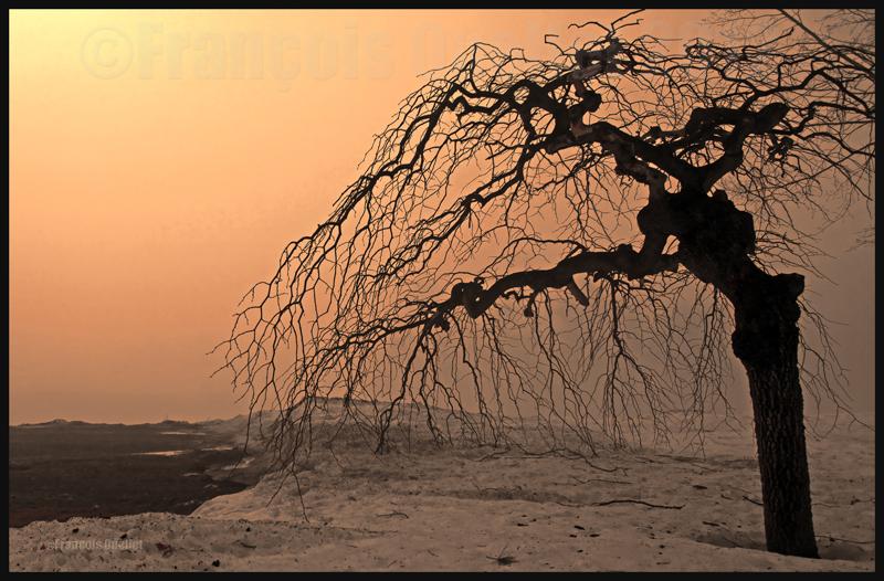 Soleil et brouillard donnent un air particulier à cet arbre du Domaine Cataraqui de la Ville de Québec, 2009