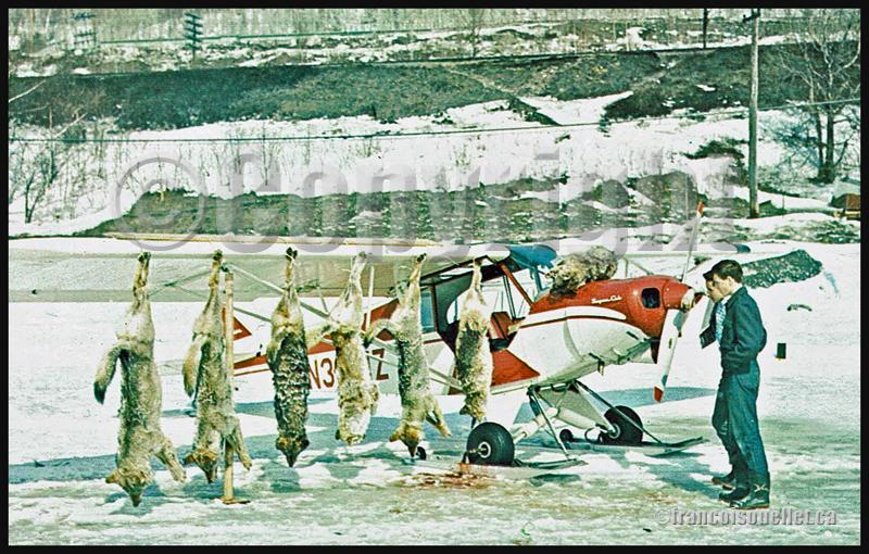 Chasser les loups du haut des airs est une façon d'assurer leur contrôle dans le nord de l'Ontario, Canada (sur carte postale aviation datant des années ,60)