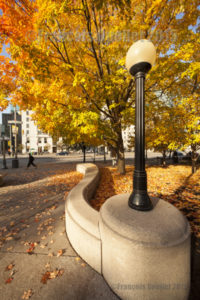 Couleurs d'automne dans un parc d'Ottawa en 2015