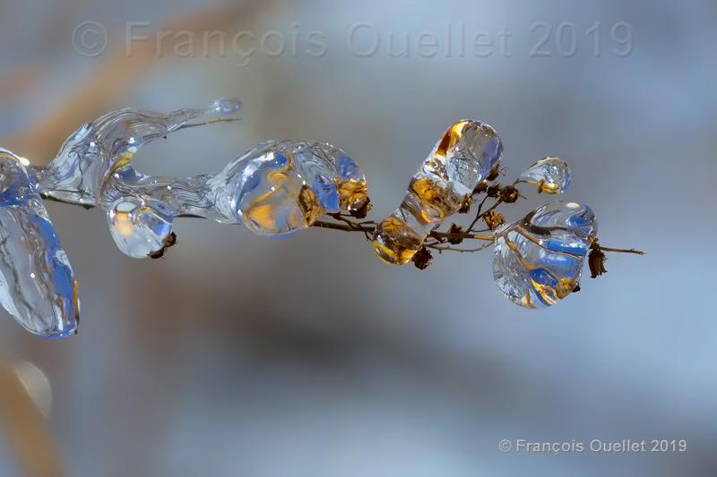 Reflets naturels dans la pluie verglaçante durant l'hiver 2019 à Québec.