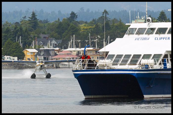 Un avion sur flotteurs de la compagnie Harbour Air s'approche rapidement du Victoria Clipper dans le port de Victoria.