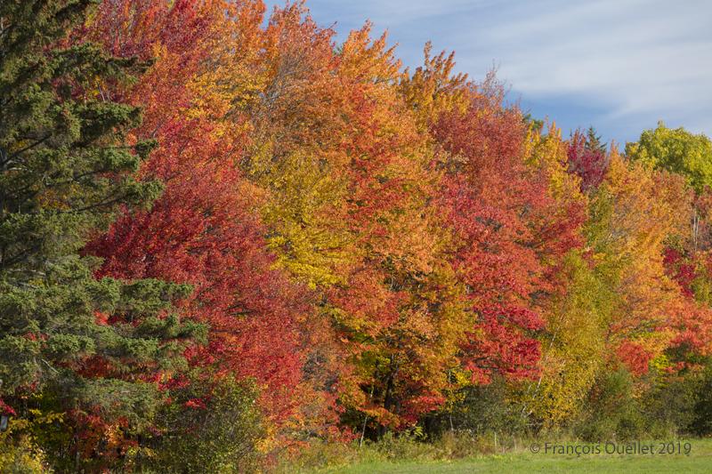 Arbres multicolores de Val-Bélair