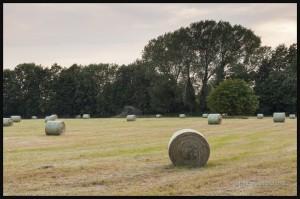 IMG_5593-Farmers-field-near-Cambridge-England-2015-web
