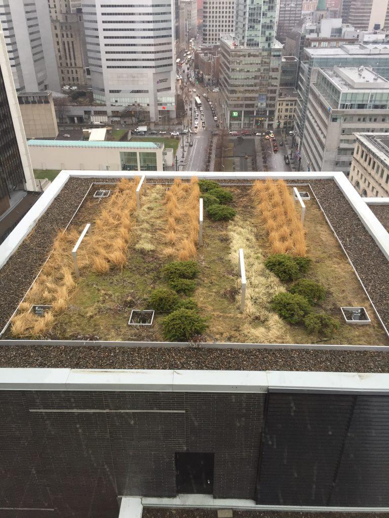 Toit plat vert Montreal Couvreur Emile Lelievre Ferblantier 2 toit plat vert Centre-ville montreal
