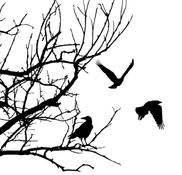 illustrated crows