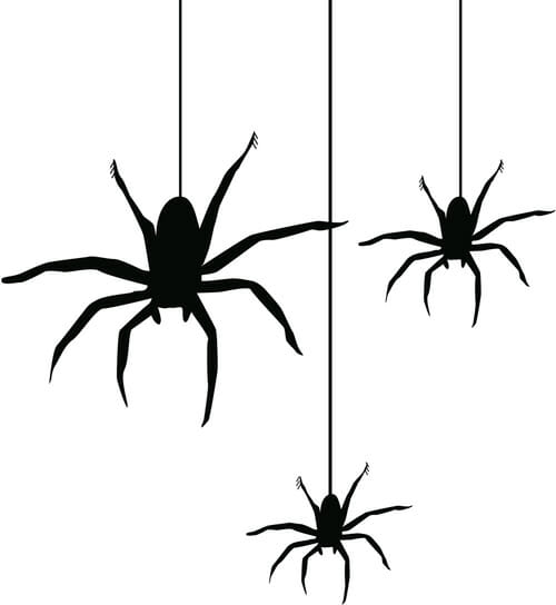 illustrated spiders