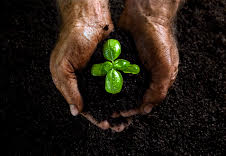 Hands with compost and plant