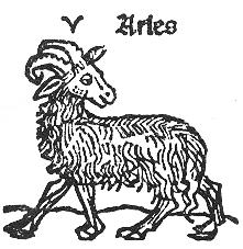 aries Kopie